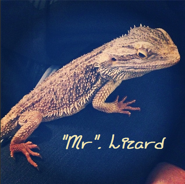 Lizards, Drama & Chocolate War – Easter 2014